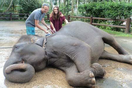 گردش یا فیل ها در تور بالی